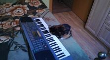 Cat with synthesizer by Main alisa channel