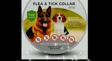 Best Flea and Tick Collar For Dogs by The Body Enigma